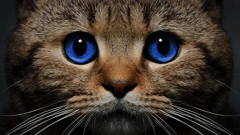 В чем польза стерилизации кошек?