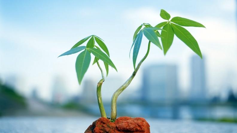 Стимуляторы для растений: какие выбрать
