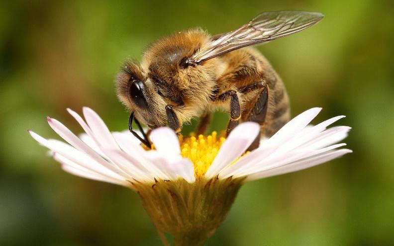 Лекарства для пчел: совет, где купить в Украине
