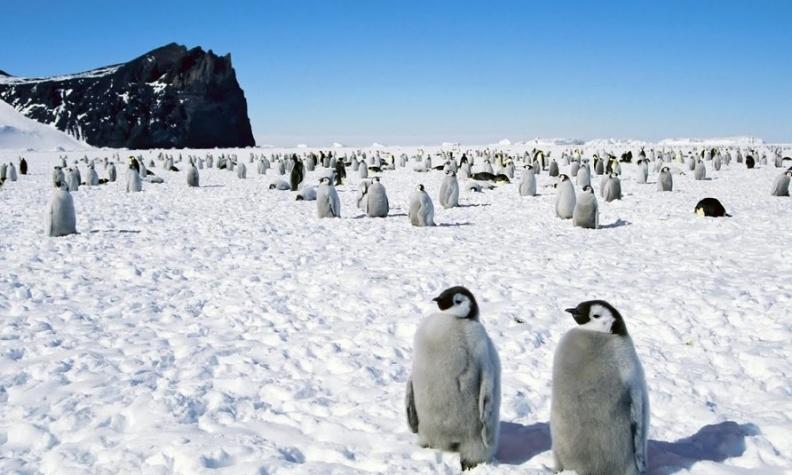 Карта Антарктиды в цифровом формате будет создана в Украине