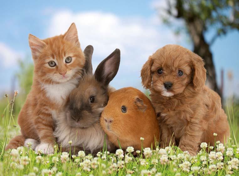 Какие товары для питания домашних животных выбрать.