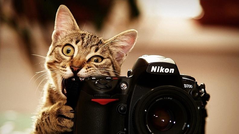 Специфика работы профессиональных фотографов