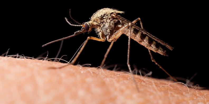 Передается через укусы насекомых. В Китае ученые обнаружили новый опасный вирус