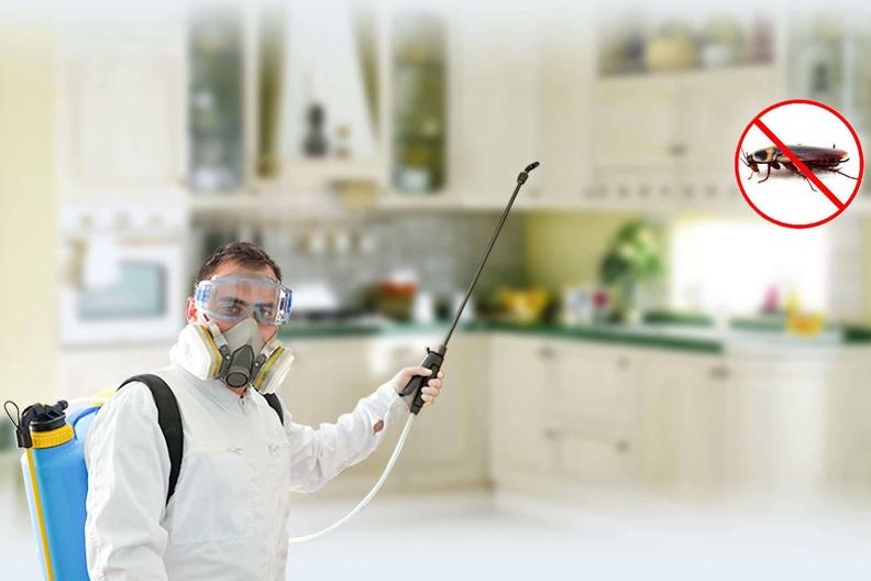 Как работают службы по уничтожению тараканов