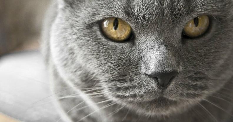 «Назло хозяевам-предателям!» Котики-британцы доказали, что могут выжить в суровых условиях