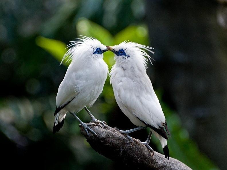 О чем поют птицы