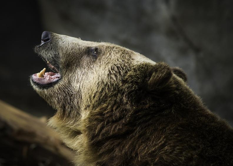 В Сочи медведи разорвали ребенка в вольере