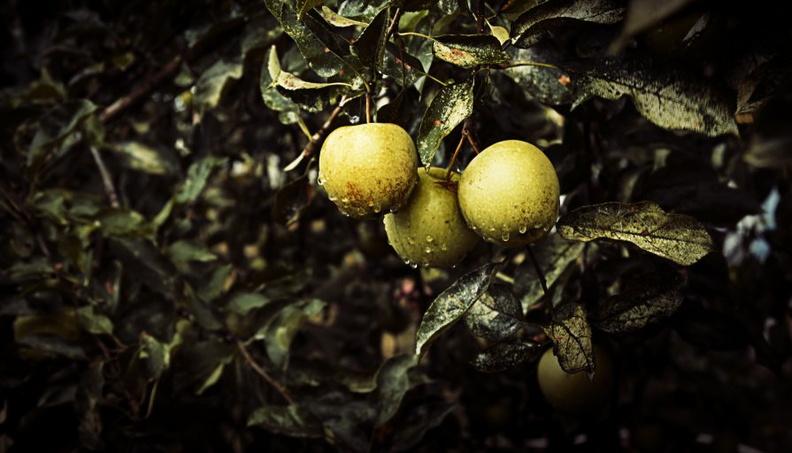 Виды плодовых деревьев для сада и огорода