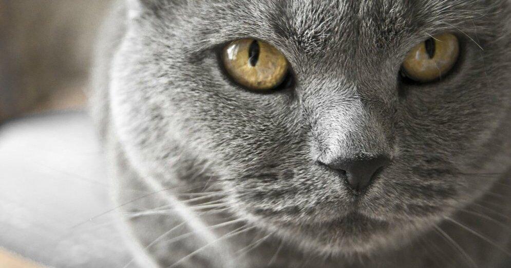 """""""КОТастрофа"""": Второй кот в мире заразился коронавирусом от своего хозяина"""